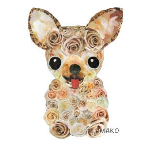 Chihuahua bara