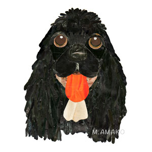 amelican cocker spaniel black