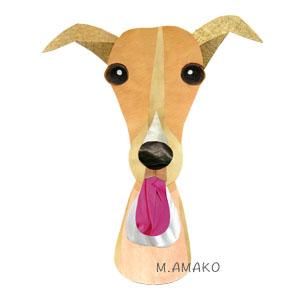 italian greyhound f