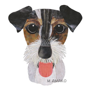 jack russell terrier tri